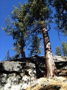 The Sierra