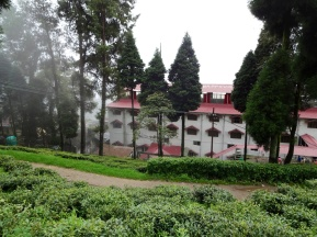Happy Valley - only organic tea farm in Darjeeling
