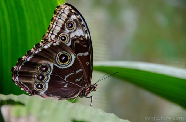 mariposacostarica