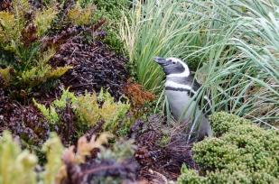 Falklands-2