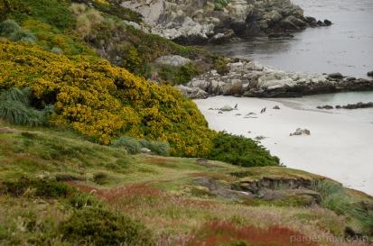 Falklands-3