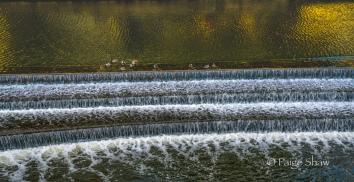 Ducks on Falls Bath