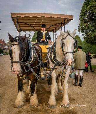 Hampton Court Horses