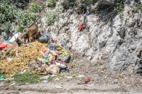 goat-food-port-au-prince-haiti