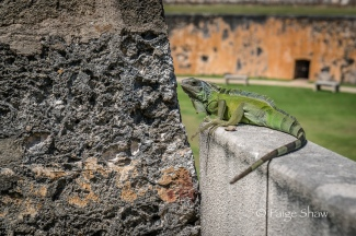 iguana-old-san-juan-puerto-rico