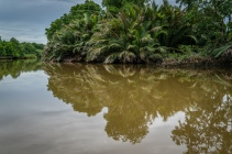 Jungle Reflections Brunei River