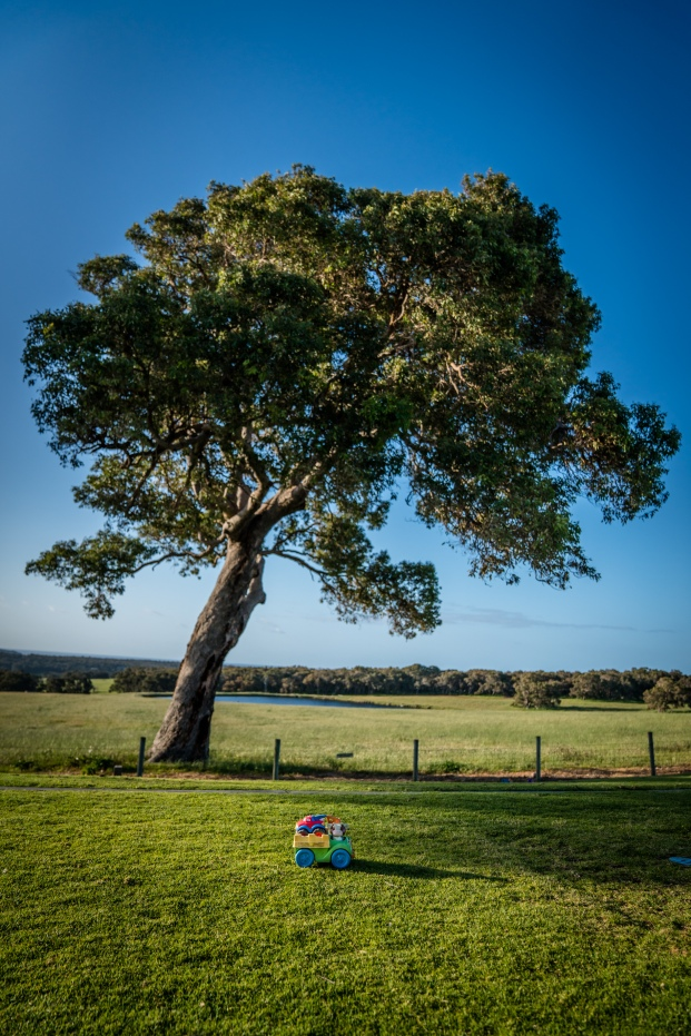 childs-toy-tree-yallingup-western-australia