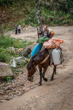 delivery-horse-longji-china