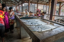 fish-shopping-needlenose-kopi-port-moresby-png