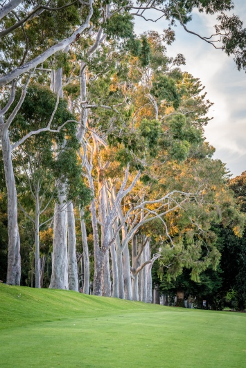kings-park-trees-sun-perth-western-australia