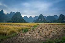rice-straw-karst-guilin-china