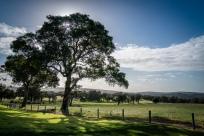 sun-behind-tree-yallingup-western-australia