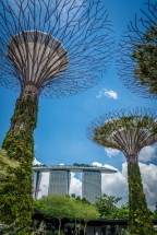 supertree-grove-marina-bay-sands-singapore