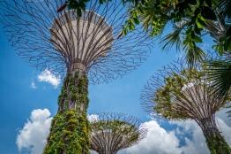 supertree-grove-singapore