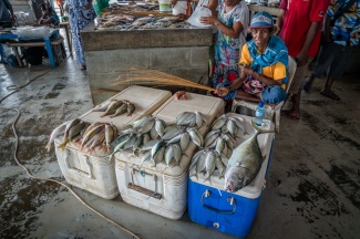 swatting-flies-fish-market-port-moresby-papua-new-guinea