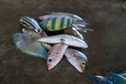 tiny-fish-kopi-port-moresby-papua-new-guinea
