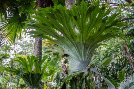 tree-plant-nature-park-port-moresby-papua-new-guinea