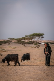 bedouin-woman-goats-jordan