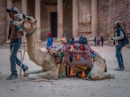 camel-closeup-treasury-petra-jordan