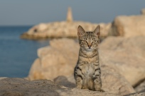 cat-time-larnaca-marina-cyprus