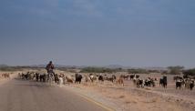 goat-sheep-herder-jordan