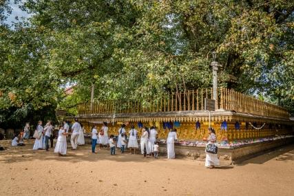 honoring-temple-kelaniya-sri-lanka