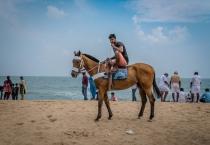 horse-ride-bengal-bay-beach-tamil-nadu-india