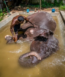 splashing-water-temple-elephant-colombo-sri-lanka