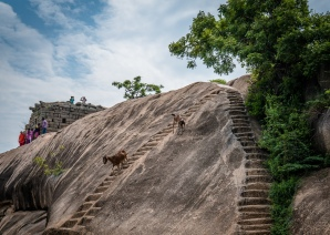 unesco-goat-trail-mahabalipuram-tamil-nadu-india