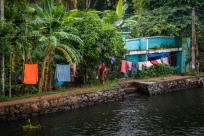 water-life-alleppey-vembanad-lake-backwaters-kochi-india