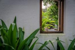 window-cat-kochi-india