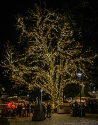 christmas-lights-tree-merano-italy