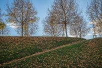 fall-trees-lawn-lucca-italy