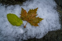fall-winter-leaves-snow-germany