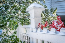 holly-bush-snow-white-fence-charleston