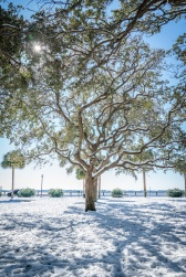 white-point-park-sparkling-tree-snow-charleston
