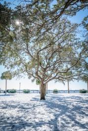white-point-park-sparkling-tree-snow-charleston
