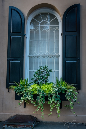 charleston-greenery-historic-shutters-windowbox