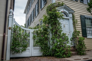 ivy-fence-entry-charleston