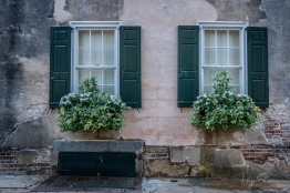 window-box-charleston-white-flowers-shutters