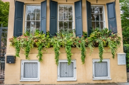 windowbox-charleston-flowers-greenery