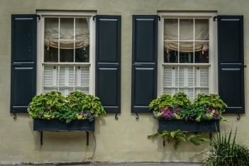 windowbox-charleston-flowers
