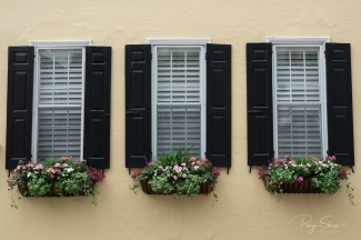 yellow-house-black-shutters-windowbox